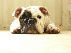 Descansando...!!! .  .  .  .  (Resting...!!!)