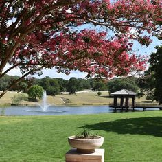 """Visit Georgetown Texas on Instagram: """"Have you visited Garey Park? Enjoy half-price admission today at the 525 acre park which includes a playground with zip lines😎, a dog…"""" Georgetown Texas, Half Price, Playground, Acre, Golf Courses, Sidewalk, Zip, Dogs, Plants"""