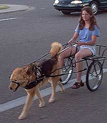 "Dog Cart DIY | want to build a dog cart ""...Does wanting to do this make me a bad person?"""