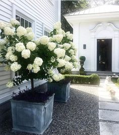 hydrangea garden care 48 Fresh And Beautiful Front Yard Landscaping Ideas Front House Landscaping, Farmhouse Landscaping, Landscaping With Rocks, Backyard Landscaping, Hydrangea Landscaping, Backyard Ideas, Landscaping Borders, Front Yard Patio, Backyard Designs