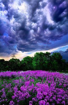 Brewing storm over purple fields