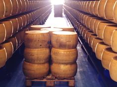#Wheels of #ParmigianoReggiano - the fine Art of #Cheesemaking in Italy! - haydryers.com - With best compliments: AgriCompact Technologies GmbH, Germany