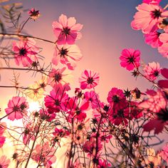 Lie down in a field of flowers and just breathe.