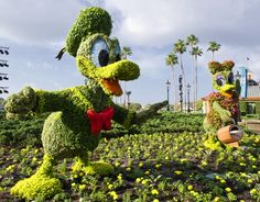 Donald Duck Topiary During the International Flower and Garden Festival in Epcot at Walt Disney World. https://www.facebook.com/ilovedisneyfan?ref=hl