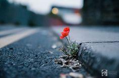 Urban Poppy | Flickr - Photo Sharing!
