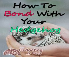 Ways to Bond with your Hedgehog.