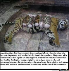 Heartwarming story!