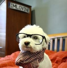 I want a hipster puppy. It would make me feel so.....hipster.