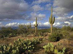 Saguaro National Park...perfect in the fall or spring