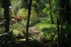 Parque de la Flora Exótica Tropical - San Felipe - Yaracuy