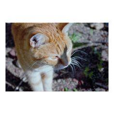 #Cat Photo Poster - #Petgifts #Pet #Gifts #giftideas #giftidea #petlovers