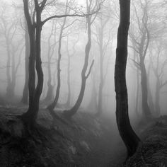 Enchanted Forest, photography by Martin Rak