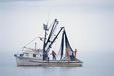 Image detail for -Purse Seiner Fishing Boat Photograph - Salmon Purse Seiner Fishing ...
