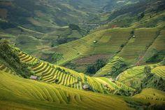 Top view (Mu cang chai) - null