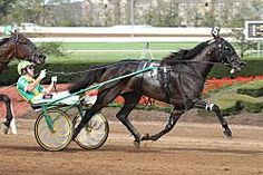 Check Me Out, world champion & richest trotting filly in harness racing history, Tim Tetrick driving for trainer Ray Schnittker