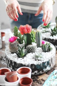 A DIY Tabletop Cactus Succulent Garden is not as hard to do, as you might think. In this easy step by step tutorial I am showing you how to do it. A DIY Tabletop Cactus Succul Cacti And Succulents, Planting Succulents, Planting Flowers, Small Cactus, Cactus Flower, Cactus Cactus, Flower Bookey, Flower Film, Flower Pots