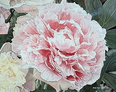 Pink Peony by Cindy Agan Watercolor ~ 15.50 x 18.50