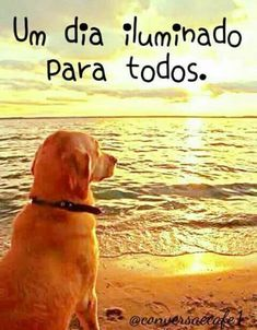 Spanish Quotes, Good Morning Quotes, Pets, Instagram, Facebook, Santa Maria, Charlie Brown, Envelopes, Messages