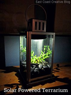 DIY...Solar Powered Terrarium. Lantern from Lowes, solar light, double sided mounting tape, succulent, river rock!  Very inexpensive and made in less than 15 min.  I am so doing this!