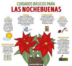 Small Vegetable Gardens, Home Vegetable Garden, Small Gardens, Eco Garden, Natural Garden, Garden Plants, Garden Ideas, Euphorbia Pulcherrima, Green Life