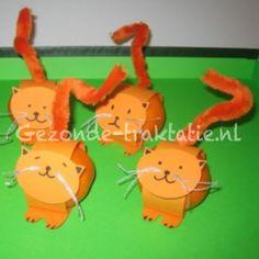 Mandarijn poes / Mandarin cat