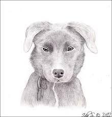 Billedresultat for tegning dyr