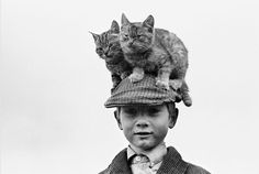 cats 'on' a hat! photo by Alen MacWeeney