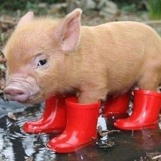 Bacon boots.