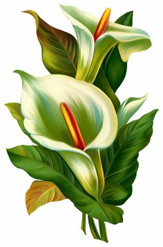 Cala lily flowers Easter scrap clipart for decoupage. Arte Floral, Floral Theme, Plant Drawing, Flower Pictures, Flower Images, Flower Wallpaper, Fabric Painting, Botanical Art, Vintage Flowers