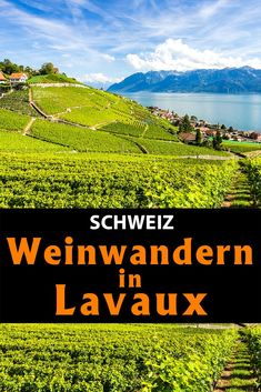 Lausanne, S Bahn, Vineyard, Christian, Mountains, Nature, Travel, Outdoor, Shade Trees