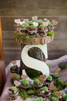 Wedding Stationery Inspiration: Favor Ideas succulents