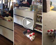 Confuso Cão Nada Em Piscina Pela Primeira Vez