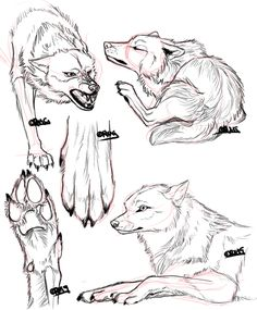 Anatomy Practice 2 by KiRAWRa on DeviantArt