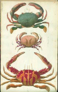 nice crab print by julie