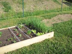 Square Foot Gardening Anyone? (Fruit Trees, mower, preserving, birds) - Trees, Grass, Lawn, Flowers, Irrigation, Landscaping... - Page 25 - City-Data Forum