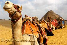 Da Sharm alle Piramidi