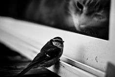 cat cute Black and White white cats black bird Window outside inside Funny Photography, Animal Photography, Amazing Photography, Nature Photography, Montage Photo, Black N White Images, Ansel Adams, White Cats, Black And White Photography