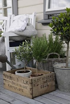 topiary, black stripe ticking, galvanized tins, baskets, crates