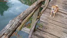 PSÍ BLOG: Výlet s chlupáčem kolem řeky Panega