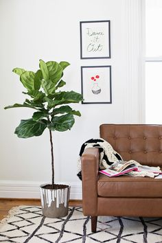 Dripped Concrete Planter DIY and a fiddle leaf fig tree Diy Concrete Planters, Concrete Crafts, Concrete Projects, Diy Planters, Home Decoracion, Deco Originale, Fiddle Leaf Fig, Home Upgrades, Home And Deco
