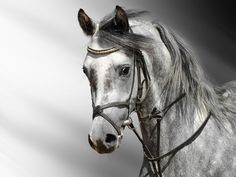 """Search Results for """"black and white horse wallpaper for walls"""" – Adorable Wallpapers Tier Wallpaper, Horse Wallpaper, Animal Wallpaper, Hd Desktop, Desktop Wallpapers, Horse Photos, Horse Pictures, Pictures Images, Hd Photos"""