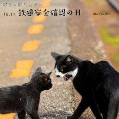 ぽちゃ猫ワンダー(@pochanekowonder)さん | Twitter
