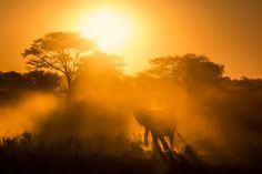 An elephant passes through dust at sunset, Etosha National Park, Namibia.