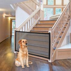 Retractable Dog Gate, Canis, Child Safety Gates, Dog Barrier, Pet Gate, Cat Dog, Pet Puppy, Dog Safety, Filets
