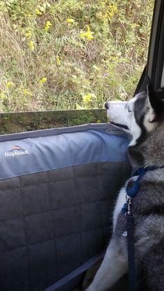 Krunco Waterproof Pet Car Door Protector Cover Black