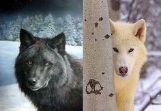 http://taylormadeforhim.com/uploads/black-wolf.jpg