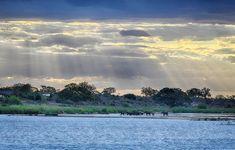 Elephant herd at Sunset walking past Lower Sabie Camp, image taken from the Low Level Bridge on the Kruger National Park, National Parks, Lion Walking, Baobab Tree, Elephant Walk, Walk Past, Tree Forest, Animals Images, Africa Travel