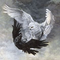 """""""Duality"""" - Original Artwork by Rebecca Magar - Acrylic on Illustration Board. This painting depicts a yin-yang inspired owl and raven fighting in mid-flight. Rabe Tattoo, Vogel Tattoo, Raven Art, Owl Print, Canvas Prints, Art Prints, Fantasy Art, Dark Fantasy, Wrapped Canvas"""
