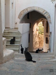 Naxos cats, Chora Naxos, Greece