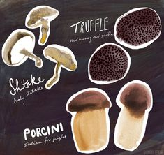 Some self-initiated illustrations of some edible and wild mushrooms.